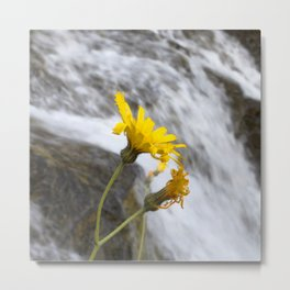 Watercolor Flower, Moist Sowthistle 03, Northern, Iceland Metal Print