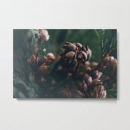 Eastern White Cedar Metal Print
