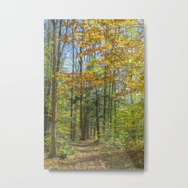 Sunny Fall Forest Metal Print