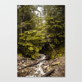 Tiger Summit: River Canvas Print