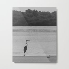 Great blue heron hunting in the mangrove Metal Print