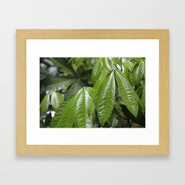Leaves in the Rain Framed Art Print