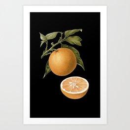 Orange - Botanical Art Print