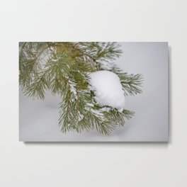 Winter's Pine 11 Metal Print
