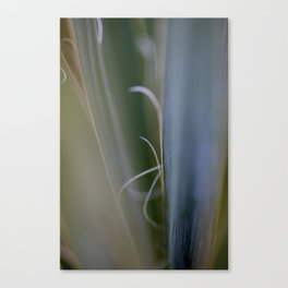 California Cactus Up Close Canvas Print