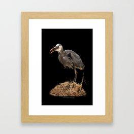 Heron Eating the Mole Framed Art Print