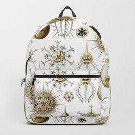 Ernst Haeckel - Phaeodaria Backpack