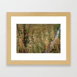 Colorado Grasses in Autumn Framed Art Print