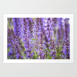 Blue Flowers in Bloom Art Print