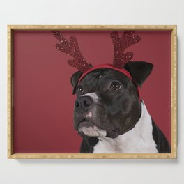 Portrait of a brown American Staffordshire terrier ( amstaff ) sitting with a Rudolph the rednosed reindeer diadem against a red background Serving Tray