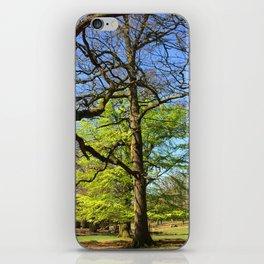 Spring Trees in Dunham Massey Park, England iPhone Skin
