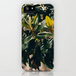 Magnolia Tree in Jackson Square iPhone Case