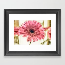 A Daisy for You a bouquet of Gerber Daisies Framed Art Print