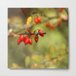 In the Middle of Autumn. Metal Print