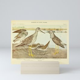 Vintage Print - Sandpipers & Yellowlegs, from Birds of New York (1914) Mini Art Print