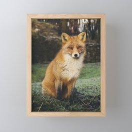 Fox Nature Framed Mini Art Print
