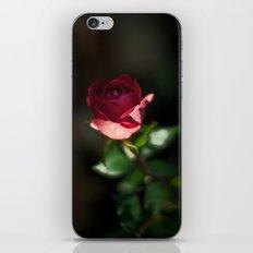 Last iPhone & iPod Skin