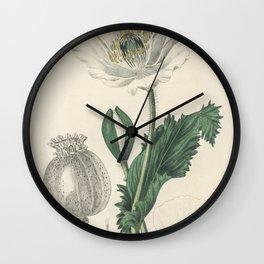 Caraway (Carum carui)  from Medical Botany (1836) by John Stephenson and James Morss Churchill Wall Clock