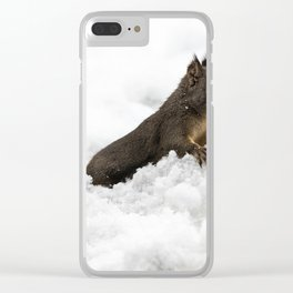Winter Squirrel II -  Cute Wildlife Animals Nature Photography Clear iPhone Case