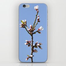Blossom Branch iPhone & iPod Skin