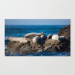 A Harbor Seal Waves Hello Canvas Print