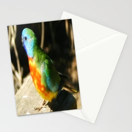 Scarlet-chested Parrot ( splendida ) Stationery Cards