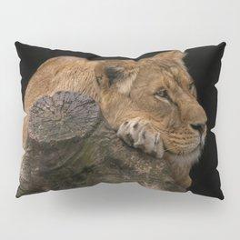 Resting Lioness Pillow Sham