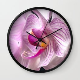 White and Pink Orchid close up Wall Clock