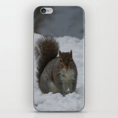 Squirrel in the snow  iPhone & iPod Skin