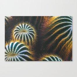 Botanical Gardens Cactus #667 Canvas Print