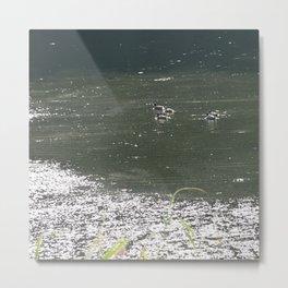 ducks iii Metal Print