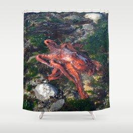 ALASKA: tidepool treasures ~ octopus Shower Curtain