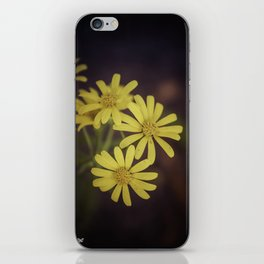 Yellow Wild Daisy  iPhone Skin