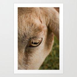 Window to a goat's soul  Art Print