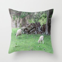Grazing Sheep, New Zealand Throw Pillow