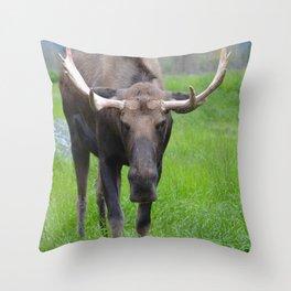Bullwinkle Bull Throw Pillow
