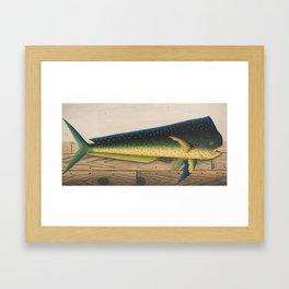 Mahi-Mahi Fish artwork Framed Art Print