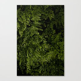 Small leaves Canvas Print