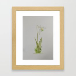 Snowdrop Framed Art Print