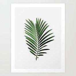 Plant, Leaf, Palm, Nature, Modern art, Art, Minimal, Wall art Art Print