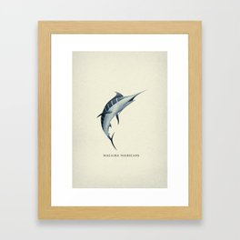 Macaira Nigricans - Blue Marlin Framed Art Print