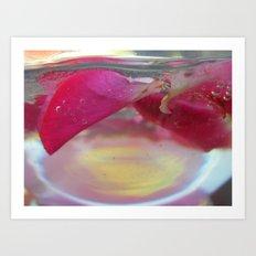 Rose Petals in Water Art Print