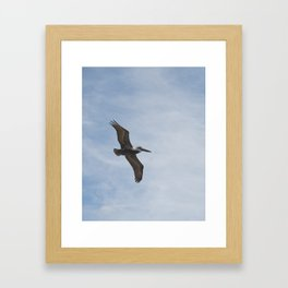 Brown Pelican - Naples, Florida Framed Art Print