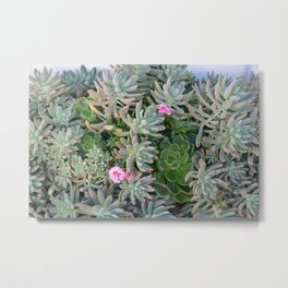 Plant with pink flowers Metal Print