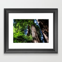 Shining Through Framed Art Print
