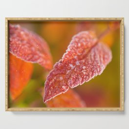 Frosty Red Leaves In The Morning Of October #decor #buyart #society6 Serving Tray