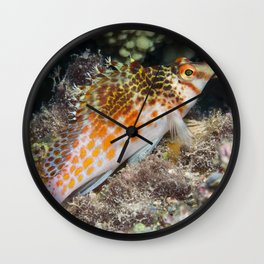 Falco's Hawkfish Wall Clock