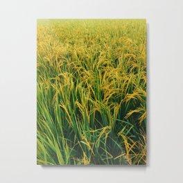Paddy Metal Print