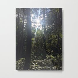 Light Through Trees 2. Rushmere Country Park, Bedfordshire Metal Print