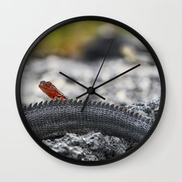 Mini laval lizard on Iguana's tail in Galapagos Wall Clock